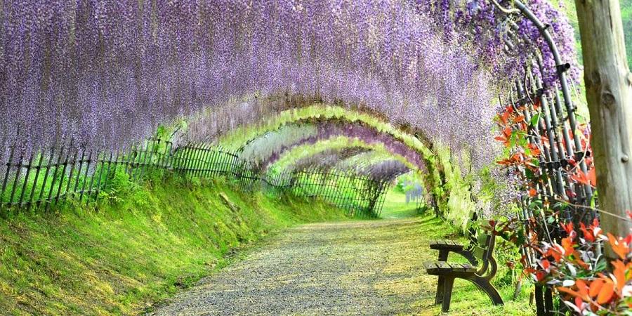 cảnh đẹp mùa xuân nhật bản là mùa đẹp nhất để du lịch nhật bản