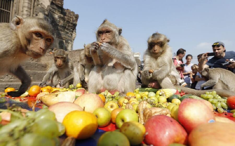 Lễ hội khỉ Pra prang sam yot