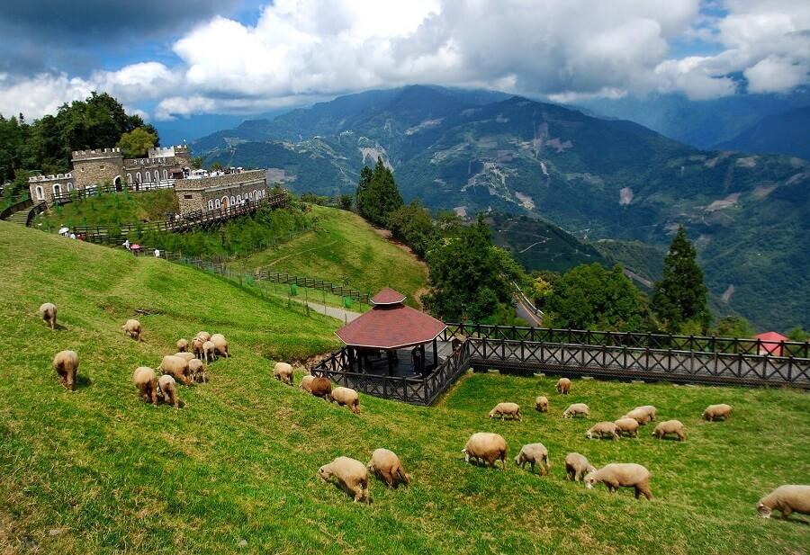 Nông trại cừu Cingjing là địa điểm du lịch hot của nhiều đoàn khách du lịch