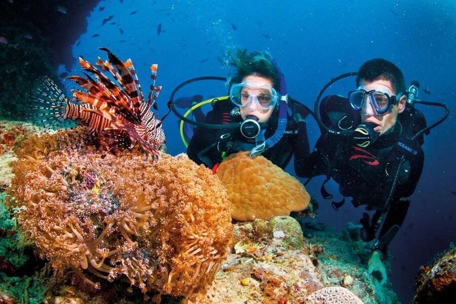 Ngắm san hô tại biển Phú Quốc