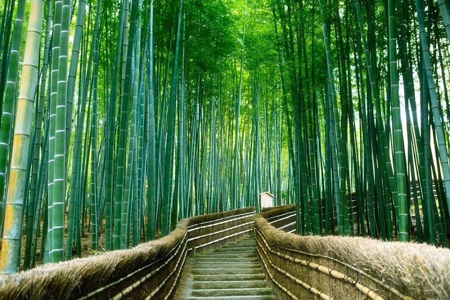 cảnh đẹp Nhật Bản khó đâu yên bình như Rừng tre Sagano