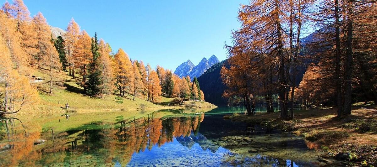 Khu rừng thông bên cạnh thị trấn cổ Thụy Sĩ