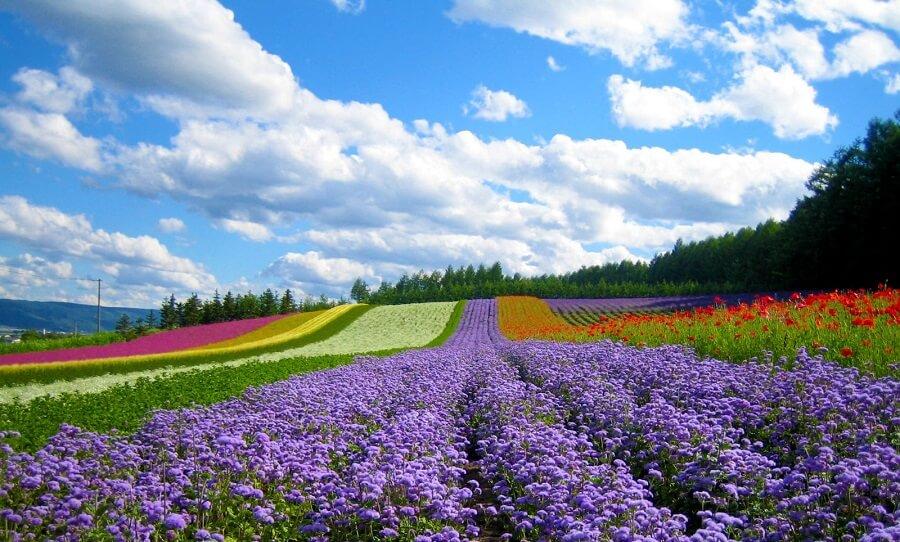 khu vườn hoa vạn thành đầy màu sắc thu hút khách du lịch Đà Lạt