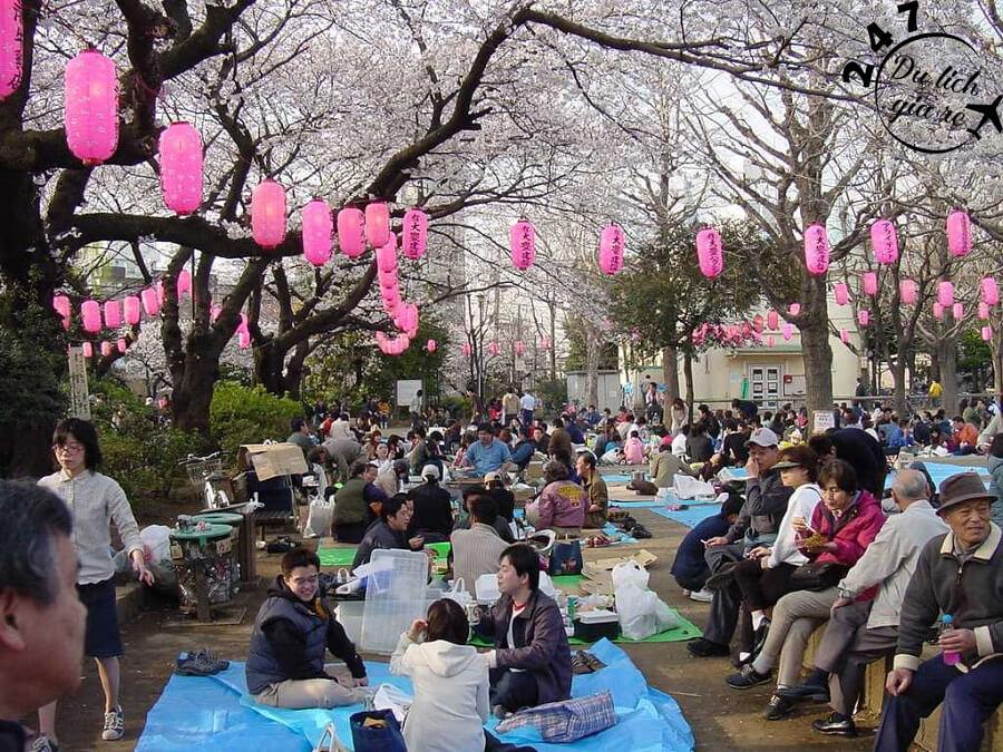 Lễ hội Hanami cực vui Du Lịch Nhật Bản Mùa Nào Đẹp Nhất, Du Lịch Nhật Bản, Tour Du Lịch Nhật Bản, Du Lịch Nhật Bản Đi Đâu, Ẩm Thực Nhật Bản, Văn Hóa Nhật Bản