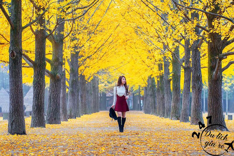 Cảnh đẹp mê hồn trên đảo Nami, Tour du lịch Hàn Quốc, du lịch Hàn Quốc Giá Rẻ, Xin visa Hà Quốc, Du lịch Hàn Quốc Ăn Gì,