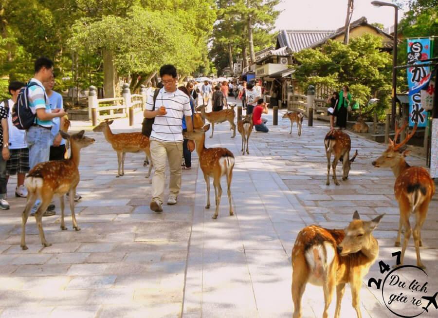 Công Viên Nara Park chơi cùng muôn thú Du Lịch Nhật Bản Mùa Nào Đẹp Nhất, Du Lịch Nhật Bản, Tour Du Lịch Nhật Bản, Du Lịch Nhật Bản Đi Đâu, Ẩm Thực Nhật Bản, Văn Hóa Nhật Bản