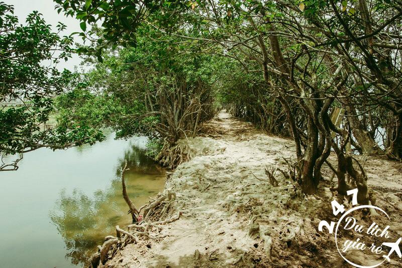 Non nước hữu tình rừng ngập mặn Huế