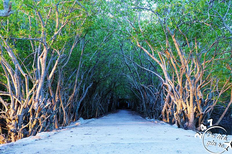 Con đường dài xuyêt suốt khu rừng