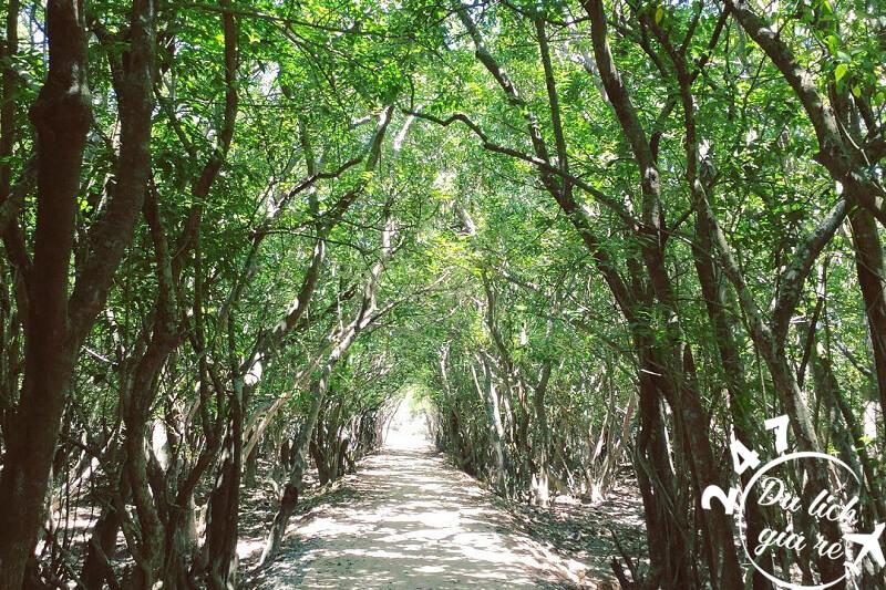 Trải nghiệm rừng ngập mặn Rú Chá Huế nguyên sơ rất đỗi yên bình