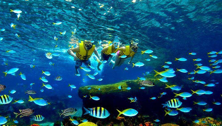 Thuy-cung-s-e-a-Aquarium