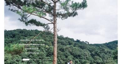 Du lịch Đà Lạt khám phá cây thông cô đơn với trái tim lơ lững giữa trời
