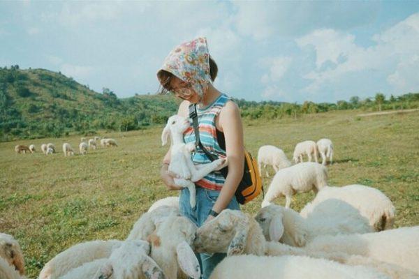 Rất nhiều bạn trẻ chia sẻ những bức ảnh siêu đáng yêu tại đồi cừu.