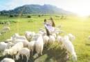 """Khám phá địa điểm chụp hình chất từng """"centimet"""" Đồi cừu Vũng Tàu"""