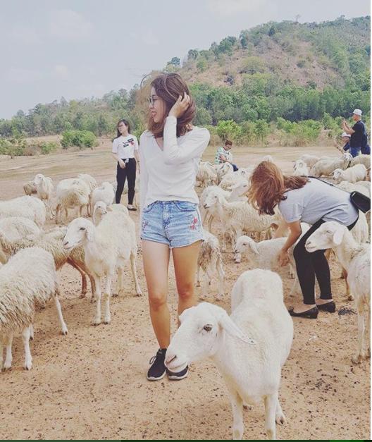 Ở đây có 3 đàn cừu với khoảng hơn 400 con cừu là một background tuyệt vời cho mọi góc hình